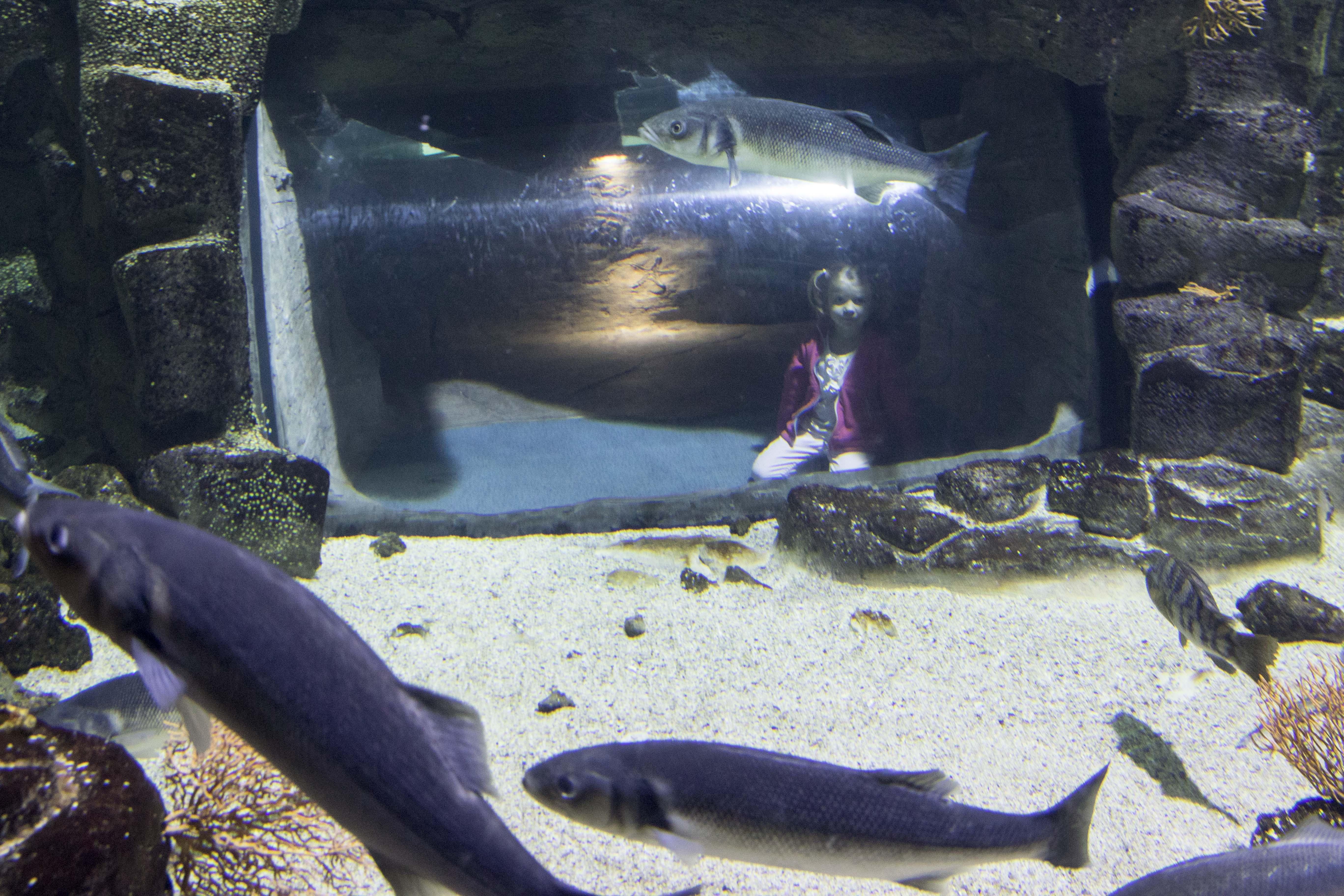 Spotting the fishes at La Rochelle Acquarium