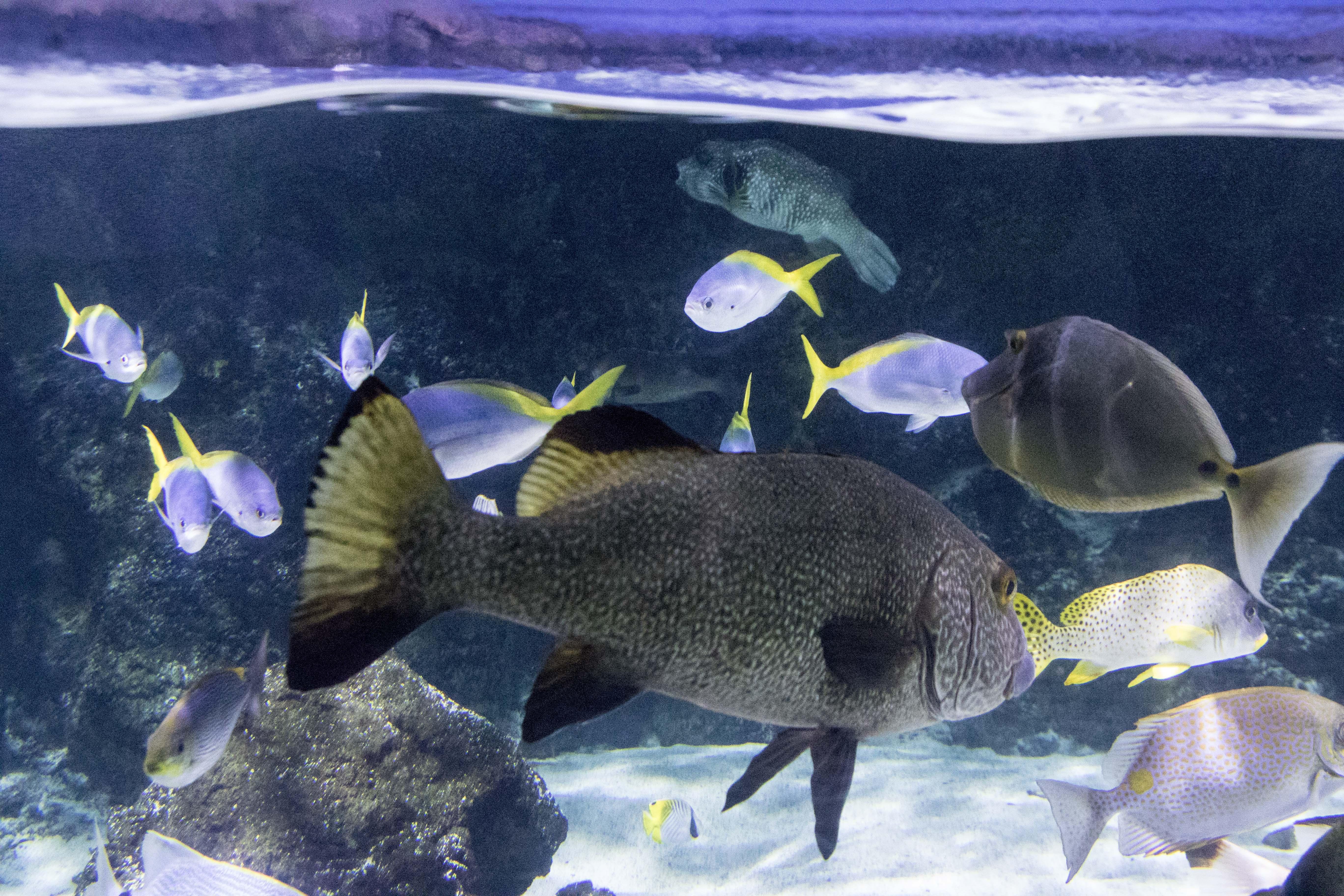 Colourful fishes at La Rochelle Acquarium